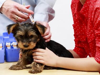 Passeport et vaccinations des chiens et chats pour les vacances