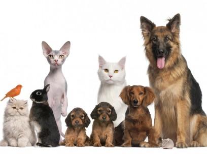 Hond, kat & co