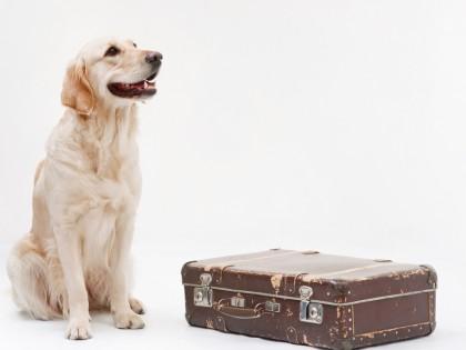 La préparation de voyage de votre animal domestique