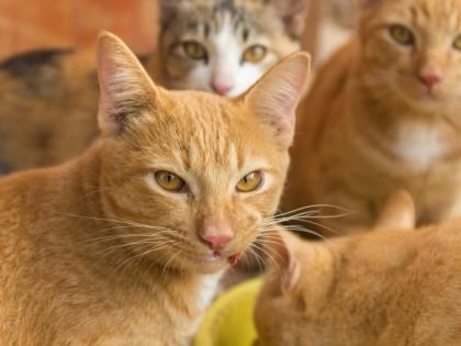 Le Japon : ses îles aux chats et son île aux lapins