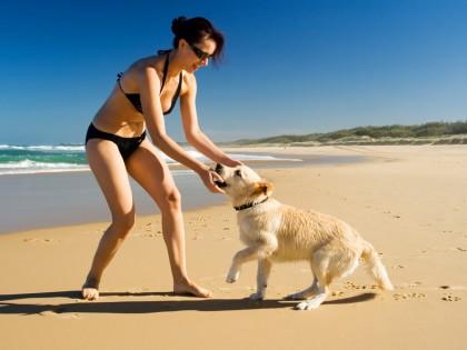 A la plage avec le chien