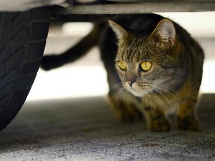 Un chat sous le capot