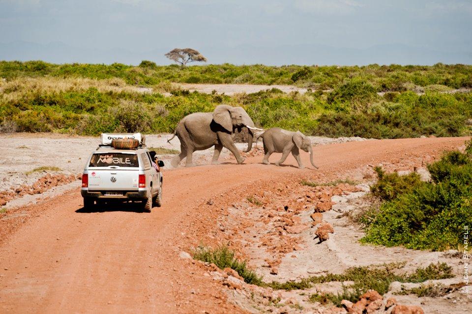 Reizen en wilde dieren