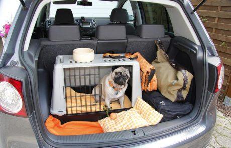 Hoe vervoer je een huisdier in de auto?