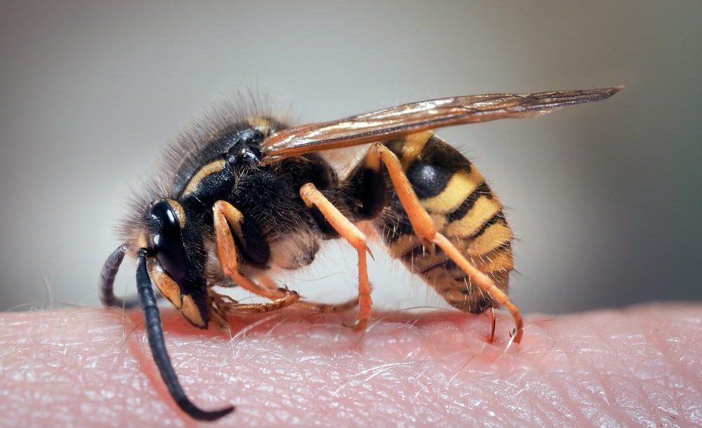 Comment éviter les piqûres d'insectes?