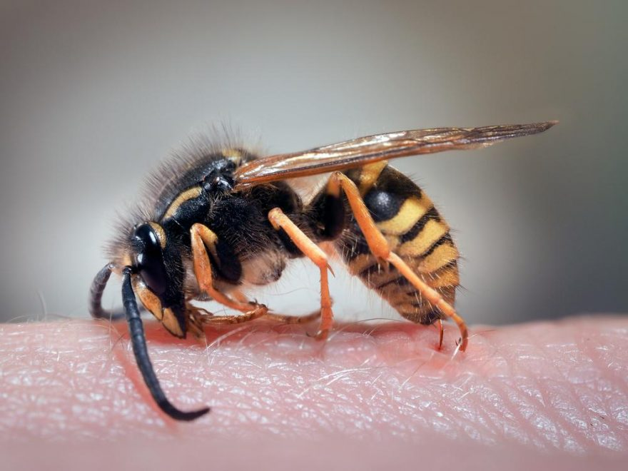 Hoe insectensteken vermijden?
