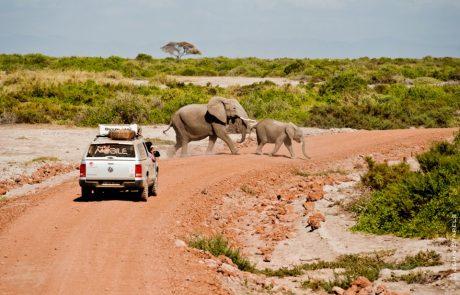 Voyager dans le respect de la faune locale