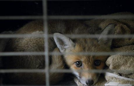 Wat indien u een gekwetst dier vindt?