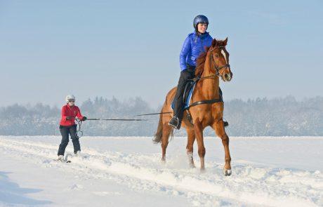 Ski-joëring: skiën met een trekdier