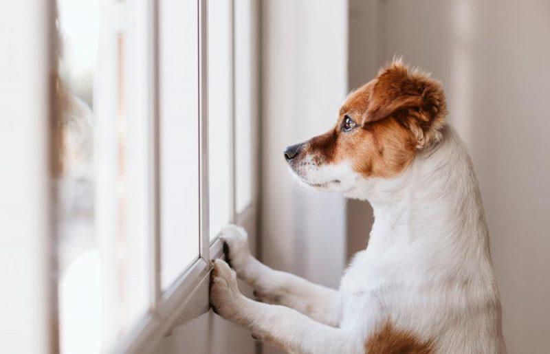 Laisser son animal à la maison pendant les vacances