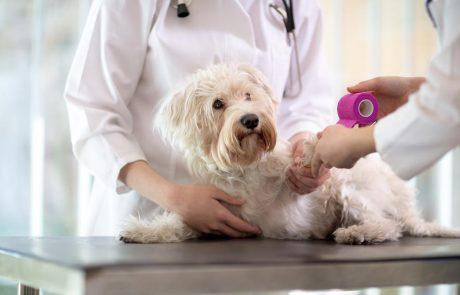 Sauver un animal blessé à l'étranger