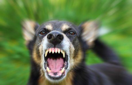 Zich beschermen tegen een agressieve hond