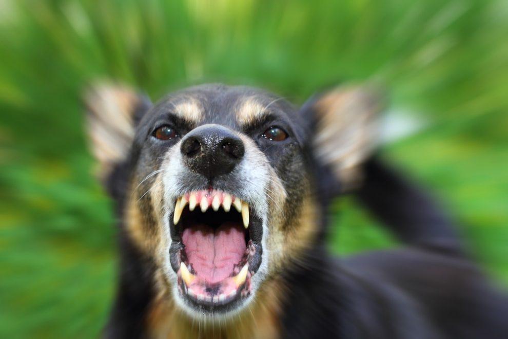 Se protéger face à un chien agressif