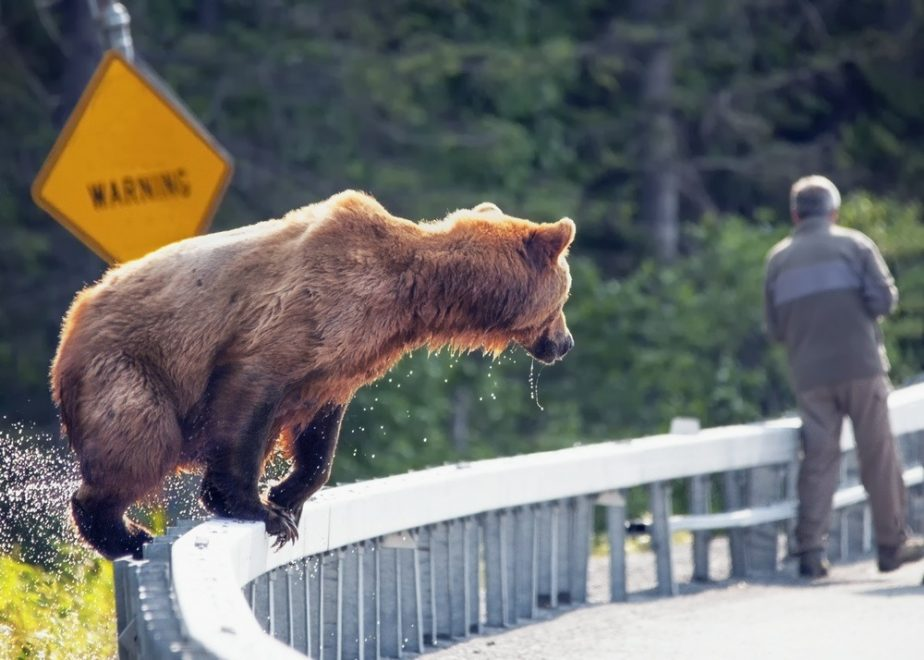 Reizen en wilde dieren: welk gedrag vertonen?