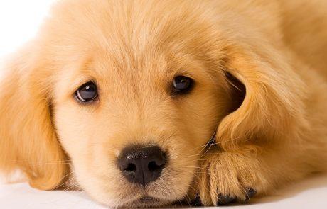 De verlatingsangst bij de hond