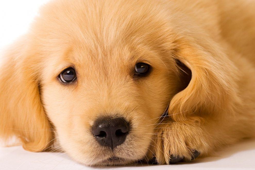 Le chien et la peur d'abandon