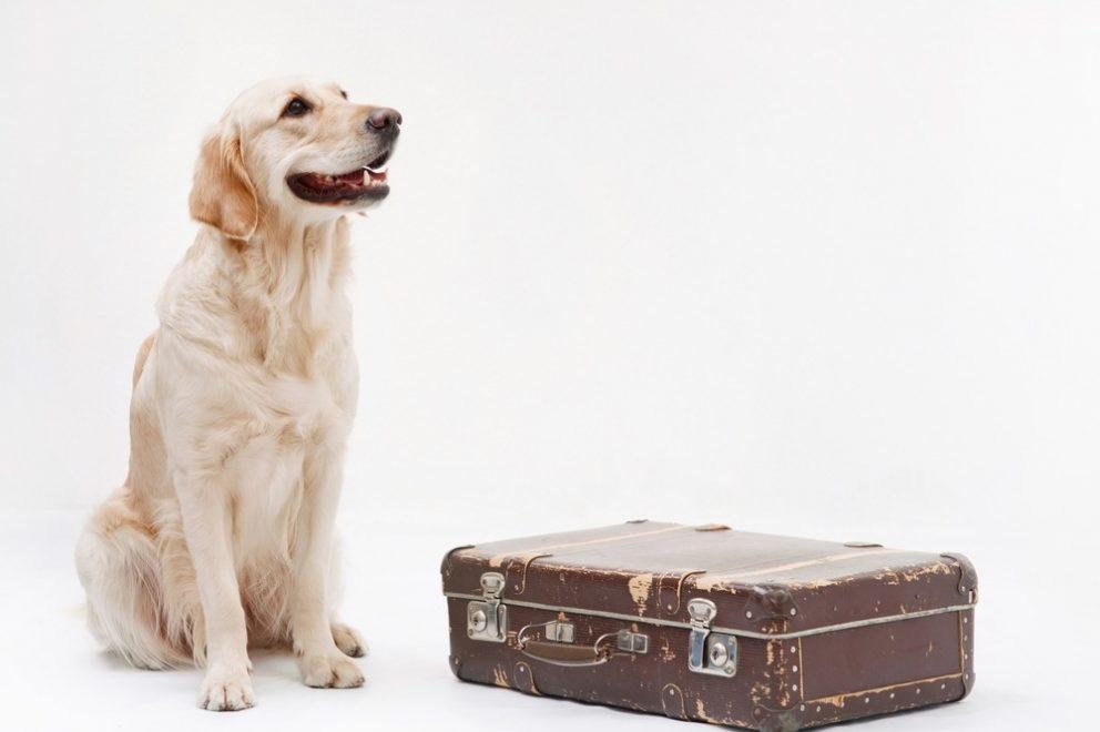 De reisvoorbereiding van uw huisdier