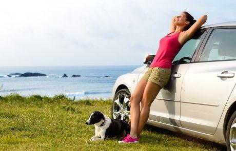 Voyager avec un chien ou un chat : voiture ou avion ?