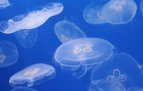 Bien réagir lors d'une piqûre de méduse