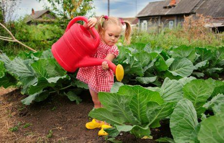 Partagez un potager pour profiter de vos récoltes