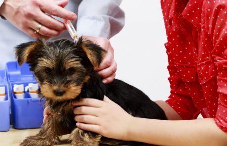 Paspoort en inentingen van hond en kat voor de vakantie