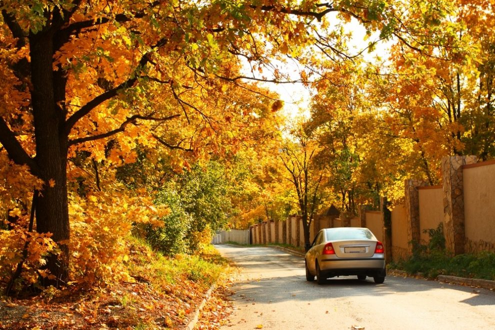 Veilig rijden met de wagen in de herfst