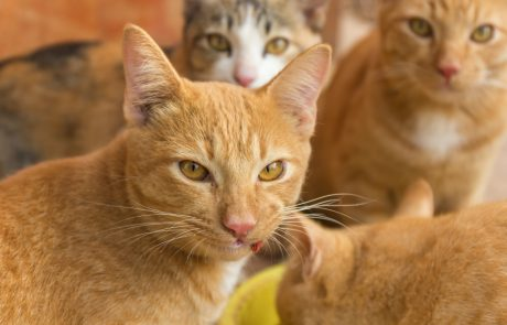 De Japanse katten- en konijneneilanden