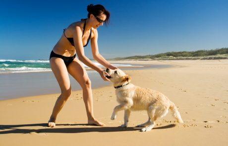 Met de hond naar het strand