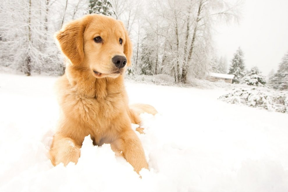 Op sneeuwvakantie met de hond